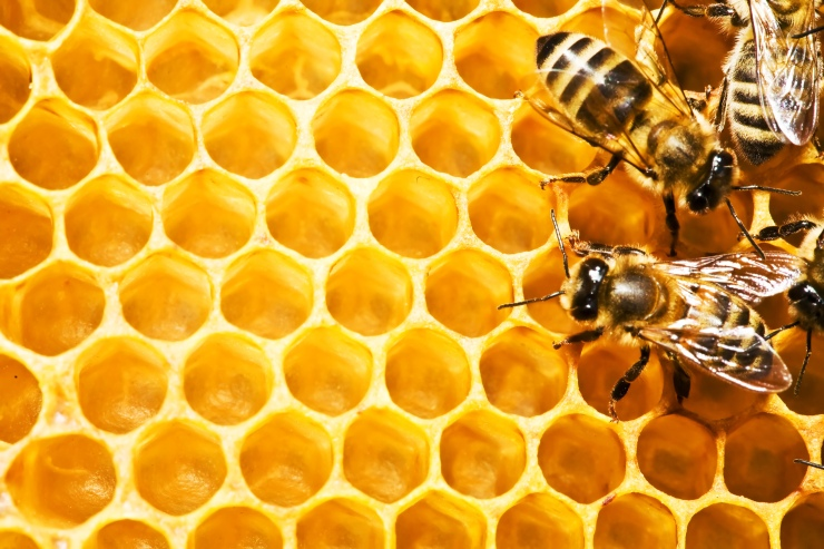 bees-honeycomb-island-desibantu